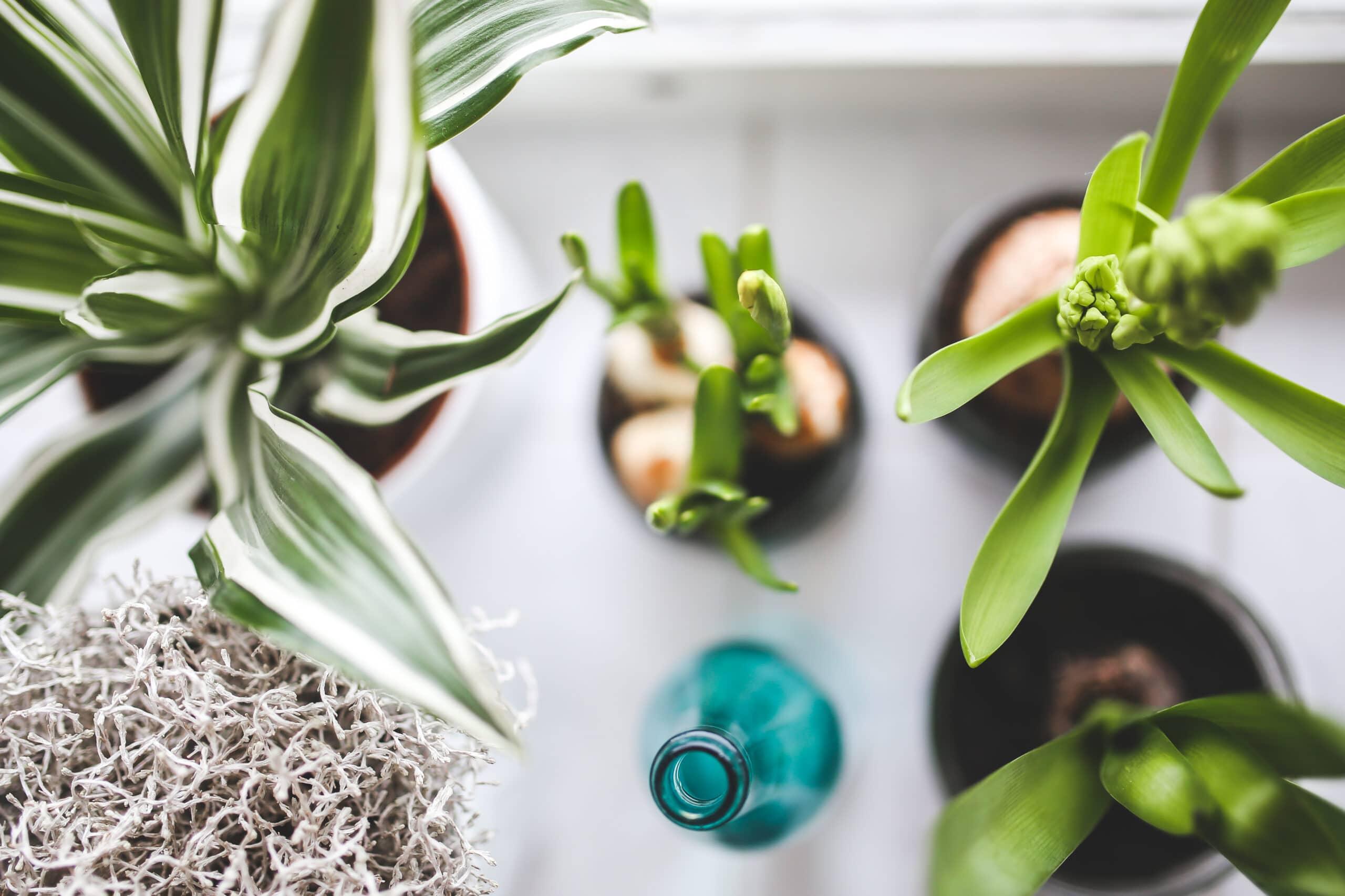 Breathe Easy: Indoor Plants and IAQ