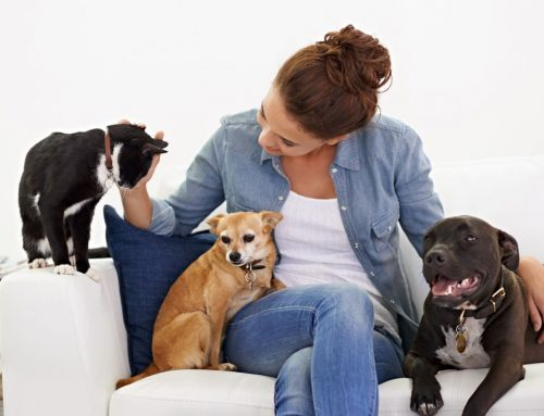 Handling Your Indoor Heating for Pets