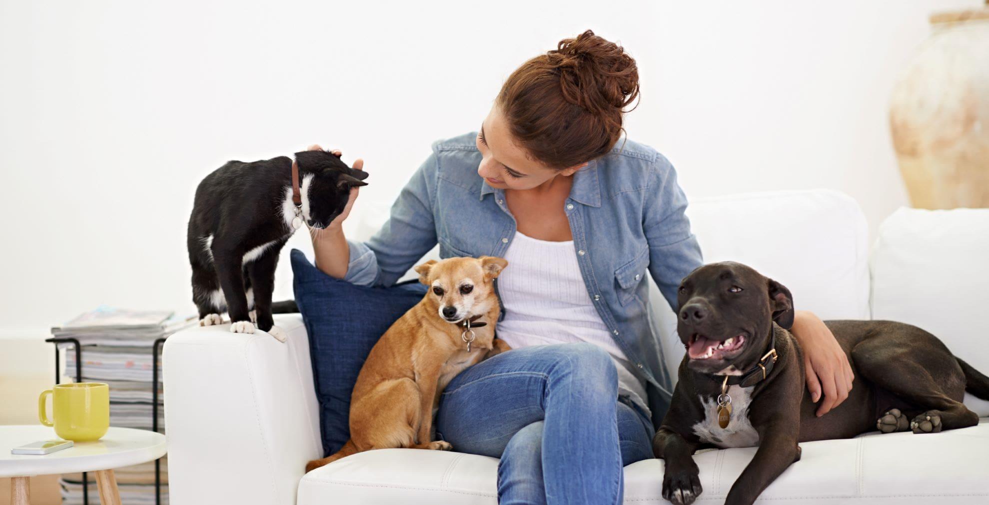 Handling Your Indoor Heating for Pets