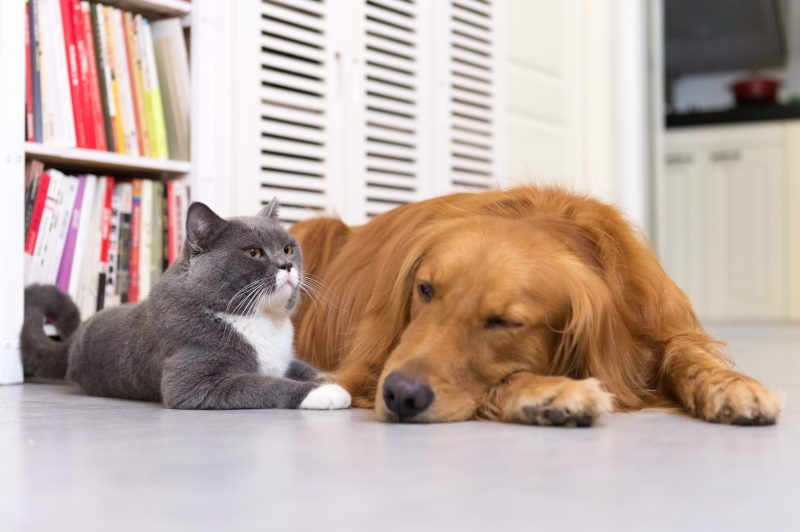 Maintaining Your HVAC in a Home with Pets