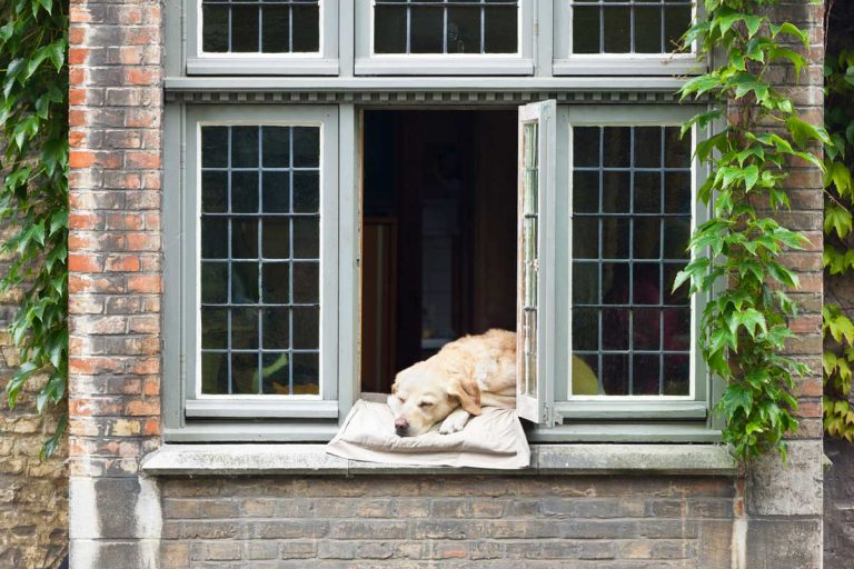 Sleeping With Window Open